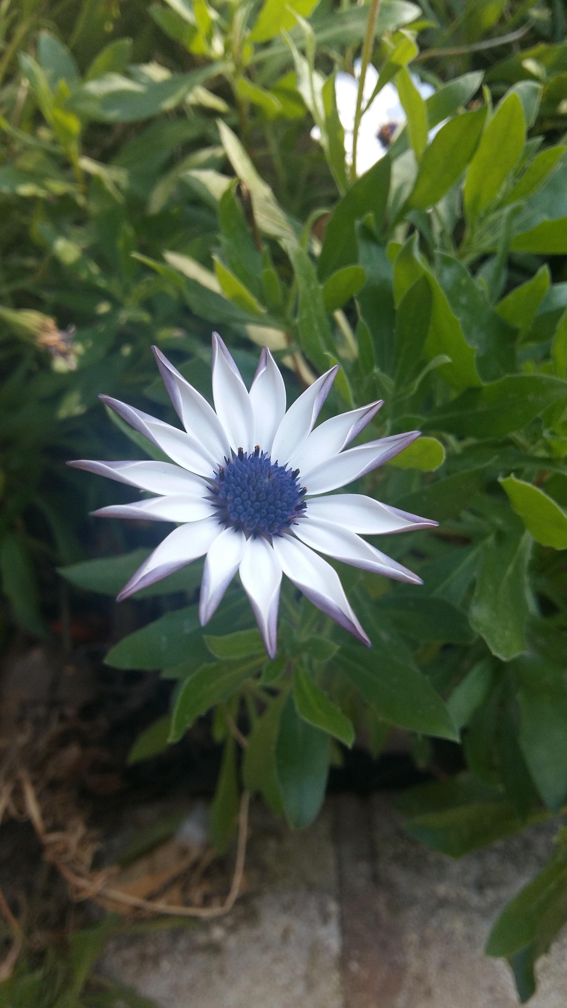 Tu as vu la belle fleur for La belle fleur